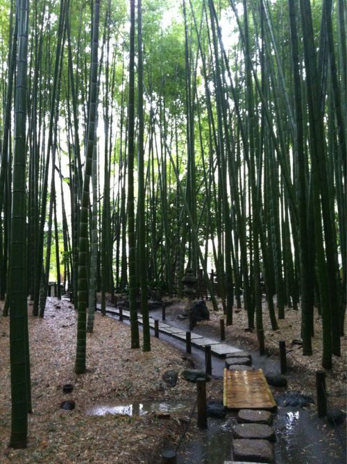 Beautiful Japanese bamboo garden! People would come here during earthquakes because bamboo roots are known to make solid, safe ground. These trees grow up to 150 feet in 3 weeks :|