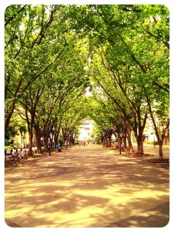 Early summer#andrography #CapturedMoment #color #tree #nature #Tokyo #Random(from @256x on Streamzoo)