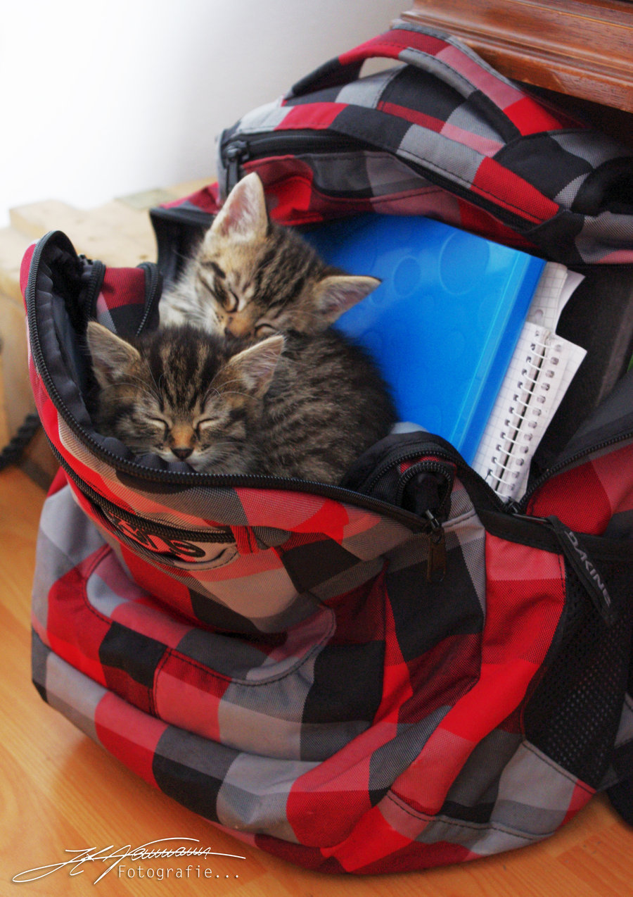 magicalnaturetour:  Cats in backpack by ~extraneous24 ~ Sweet Dreams beautiful friends ♥