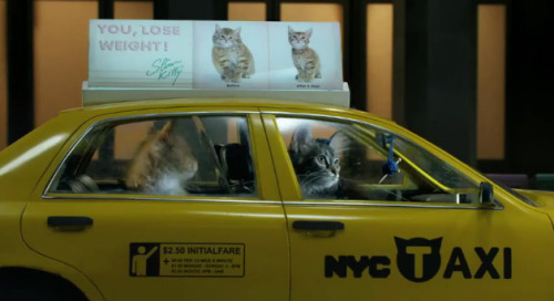 get out of there cat. you can't drive new york taxicabs.