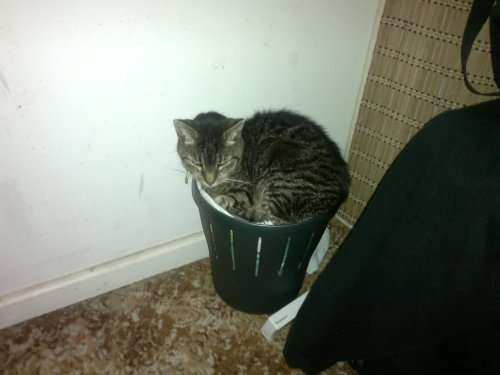 get out of there cat. the bin is not for sleeps.
