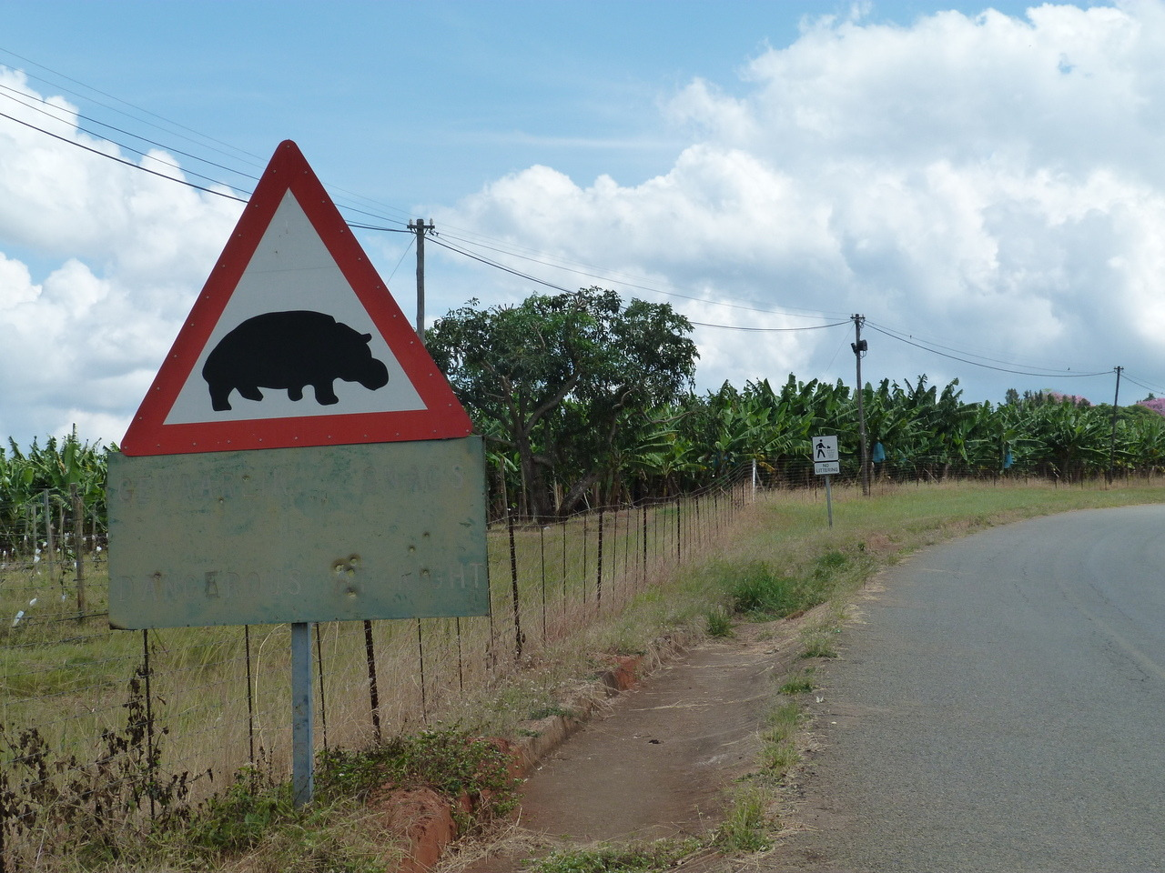 Hippo crossing! Another of my photos from Africa. Peace out.