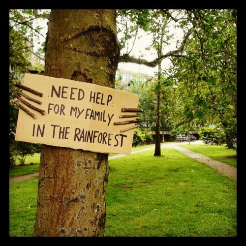 recordbreakin:  #treehugger #rainforest #trees #awareness (Taken with Instagram at A Park Near You)