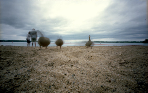 Pinhole: The Ducksies, They Comes For You on Flickr.f235, Kodak Portra 160, ~3 seconds Shot while looking for letterboxes w/The Girl.