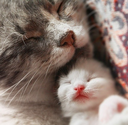 magicalnaturetour:  Cats sleeping by ~AnastasiaSia :)~ Sweet Dreams beautiful friends ♥