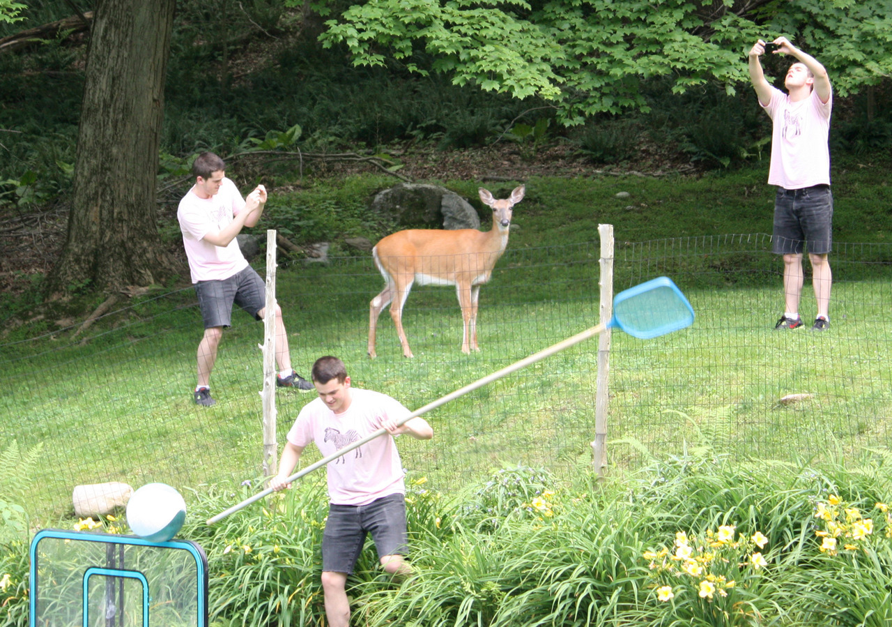 ARTIST AND HIS DOPPELGÄNGERS CAPTURE A DEER, 2012 Performance √