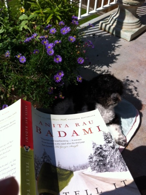 Sunny day, relaxed dog, blooming flowers and a perfect book to read - Tell It to the Trees by Anita Rau Badami. Definitely, put it on your reading list.