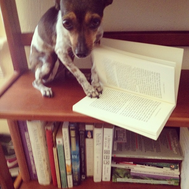 Send us pictures of your PETS WITH BOOKS! social@pubslush.com  we will feature our favorite pictures as a summer series every Friday!