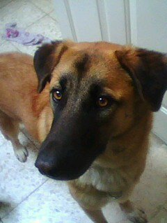 my friend's dog her name is Lucy…she is quite big but she is really adorable