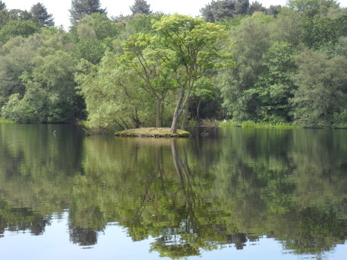 Bracebridge Pool, Sutton Park, Sutton Coldfield - the first nice day we've had in a while. In the summer people swim here though with Algae blooms they don't encourage it.