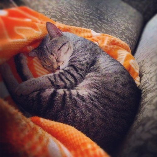 Mr.kitty #kitten #catsofinstagram #cats #vols #tennessee  (Taken with Instagram)