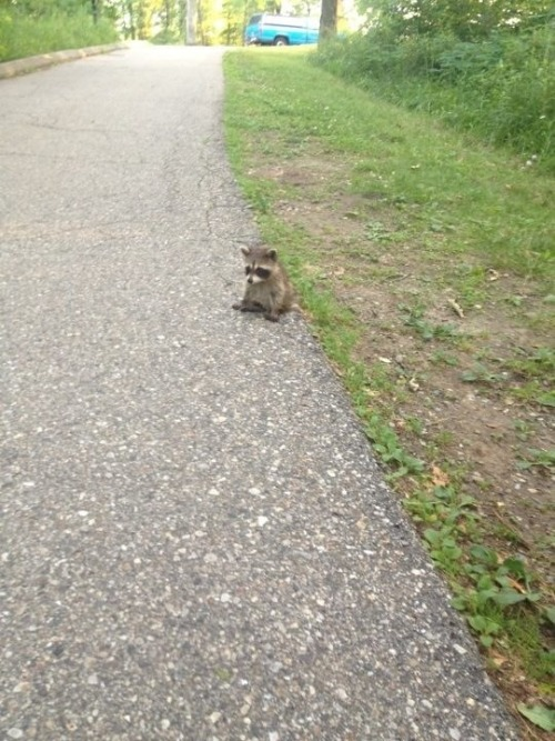 askinnyblackman:  world's saddest raccoon
