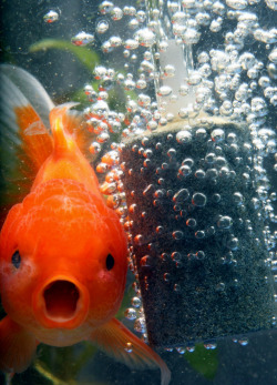 fagg0tisme:  sick-prick:  OMG  Fishy with open mouth like this —> :O