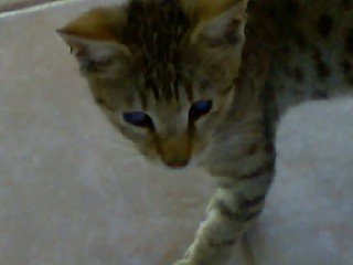 my cat when he was still a cute little kitten!!