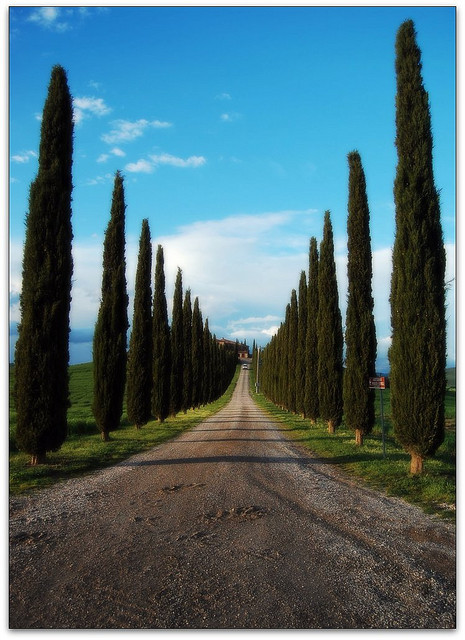 | ♕ |  Cypress road - Val d'Orcia, Tuscany  | by © Noelle Smith