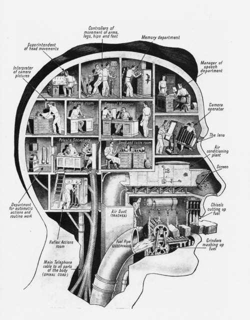 thekhooll:  Vintage brain segment activity schematics
