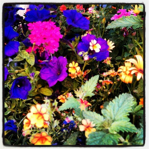Flowers for my tophie :) (Taken with Instagram)