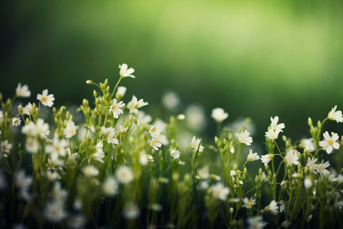 tangledleaves:  Lost in Green by Matthew Dartford