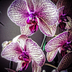 Orchid (HDR effect) on Flickr.