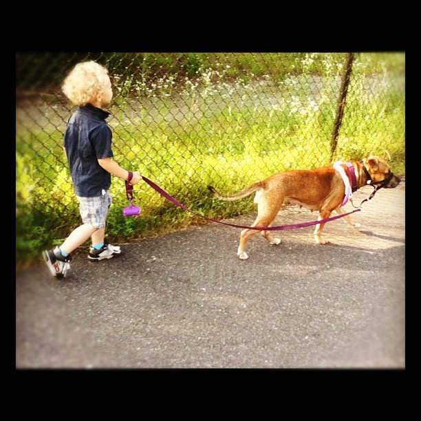 Jackson walking Lucy on the bike path. #shelterdog #dog #pitbull #boxer #child #son (Taken with Instagram)