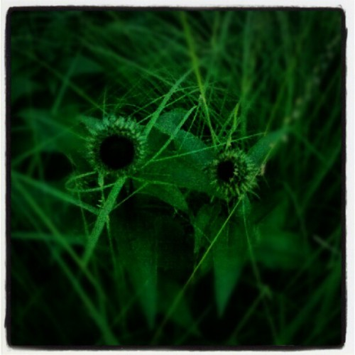 #flowers #nyc #plant #thehighline (Taken with Instagram)