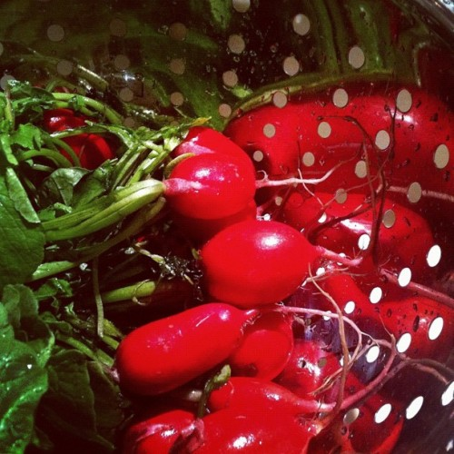 Radishes, and their reflection. (Taken with Instagram)