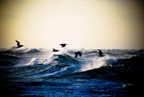 Pelicans on the Point by mekanized