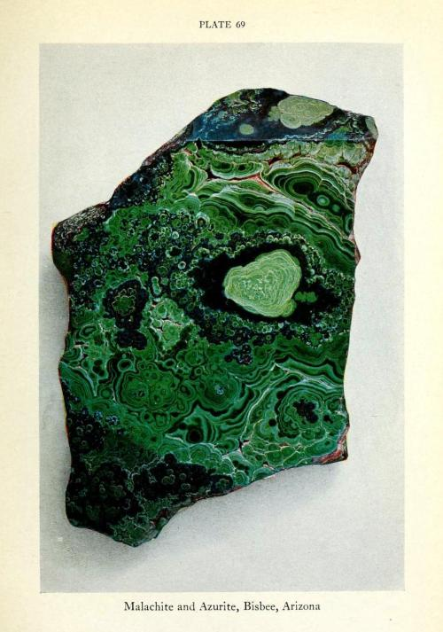 biomedicalephemera:  Malachite and Azurite You know how copper turns green when it's left to oxidize? That process is what makes malachite green. It's known as a copper carbonate hydroxide mineral, and is the source of most green paint pigments used until about 1800. The rich blue mineral azurite (also one source of ancient paint pigments) is commonly found with malachite, and both are commonly found around large limestone deposits. Limestone is a form of aggregated calcium carbonate, and one of the primary sources of carbonate for both malachite and azurite formations. Arizona is the primary site where one can find malachite in North America. Malachite is more common than azurite, because it is far more stable to open air and sunlight. Minerals from Earth and Sky, Part II: Gems and Gem Minerals. William F. Foshag, 1929.