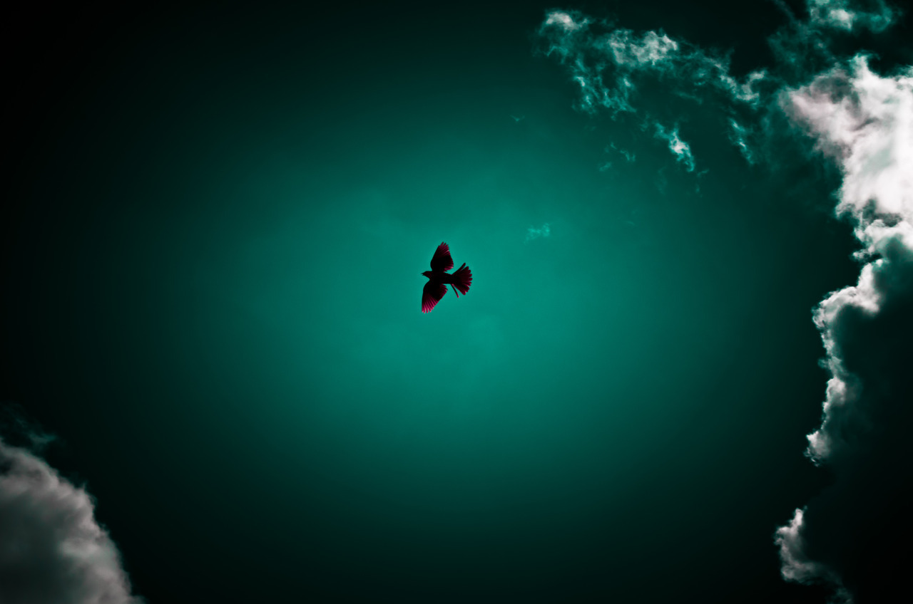 When A Bird Flies… http://lucashickey.blogspot.com/