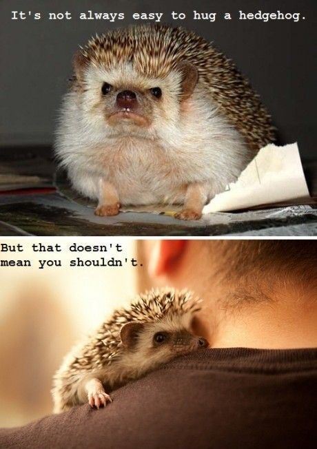 It's not always easy to hug a hedgehog…
