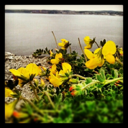Cornwall, Penzance (Taken with Instagram)