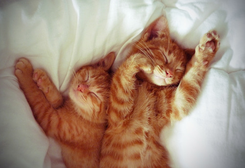 artpixie:  sleepykittensiesOLD (by peachcheeks)