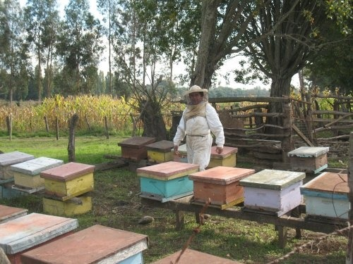 (via fairtrade) Omar Valdés is a member of COASABA honey cooperative. We got to see part of his beautiful work, with his beehives and those of his father. Omar Valdés doesn't own land, so he rents a small piece of property in the outskirts of the city of Santa Bárbara, in the town of Los Mayo. This allows him to leave his bees with access to plenty of food and fresh water, but at the same time it is close to his home. When asked how he thinks his life would be without the cooperative Mr. Omar says:  My life wouldn't be the same, neither for my family nor for the region's beekeeping. Fairtrade International's Liaison Officer Ingrid Allende joined COASBA honey cooperative in Chile for their general assembly. The election process was a chance for producers to talk about their organization and their reasons for becoming a cooperative. Read more here…