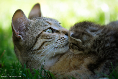 Hold Me, Mommy! by Zoran Milutinovic