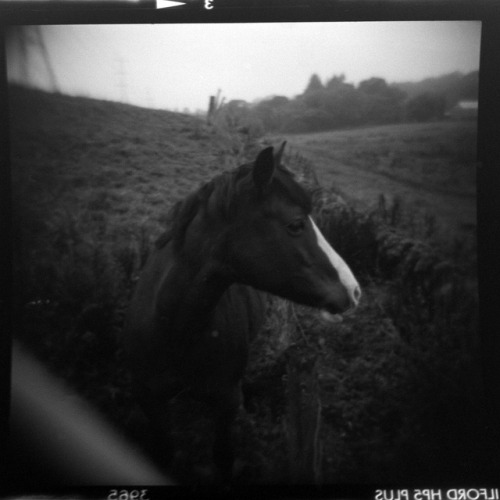 horse. on Flickr.