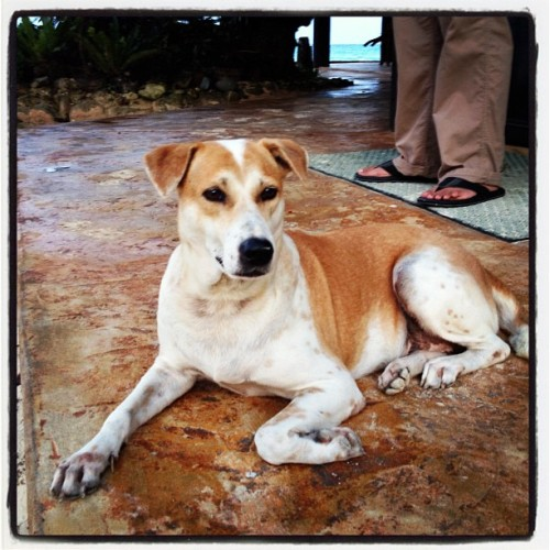 Emoting Dawg #dogs (Taken with Instagram at Boracay Terraces Resort)