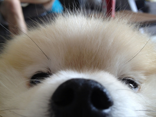 tommypom:  GOOD MORNING WORLD!