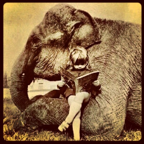 My favorite photo at the moment. #Elephant #Reading #LittleGirl #Cute  (Taken with Instagram)