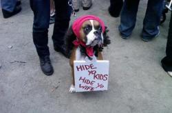 collegehumor:  Dog Dressed as Antoine Dodson Antoine Dogson