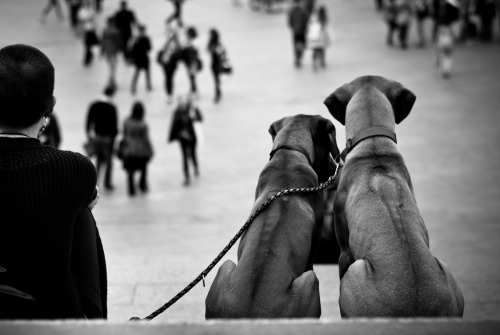 Two Dogs one Soul (by Das Fotoimaginarium)