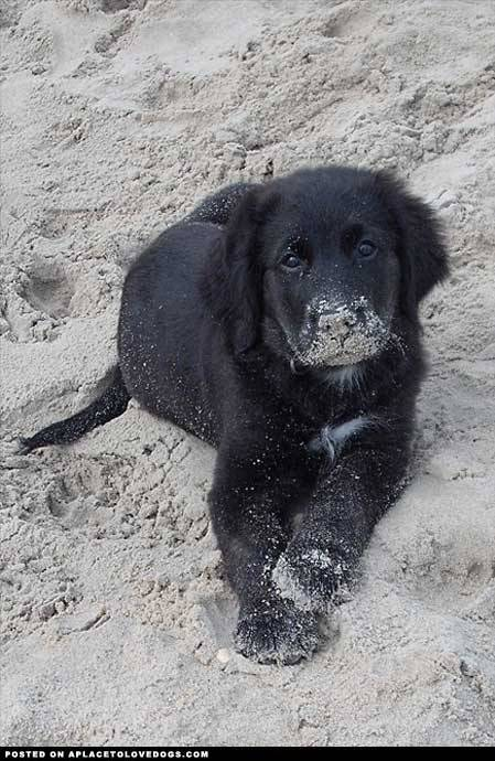 Submitted by Sarah E: He really enjoyed his first day at the beach