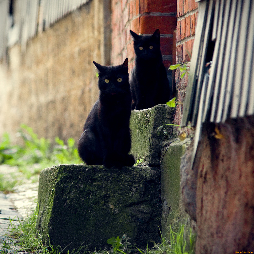 photogenicfelines:  semaphore cats (by nerdmeister23)