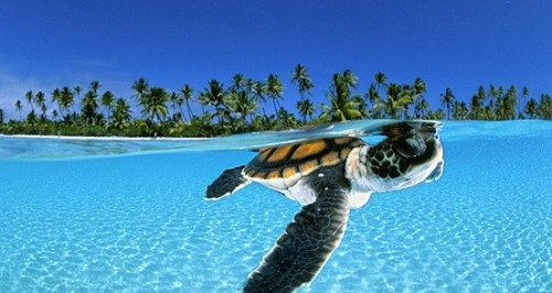 Requested: Sea Turtle. Unknown Photographer.