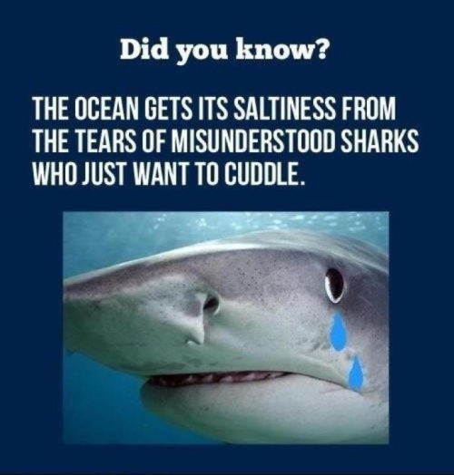 Shark week is right around the corner, here is a shark fact