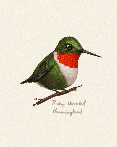 sirmitchell:  Fat Bird #4. Possibly my favorite bird of all time, the Ruby-throated Hummingbird.