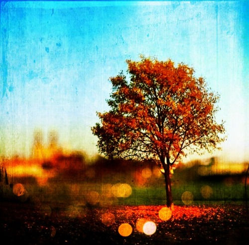 Day 354/365 - Orange tree I used BigLens, Picfx (Lana, Bokeh 2), Scratchcam and Image Bender Listening to Henry Mancini - Moon river