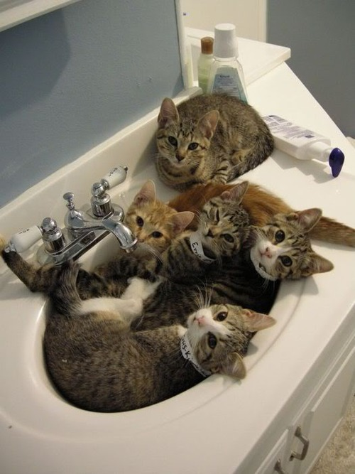Dear Sink Kitties, Not cute enough. Add shower caps. From your friend, Zoe