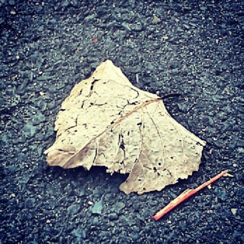 #leaf #bored #fuckit #nature #birdcall #getit (Taken with Instagram)