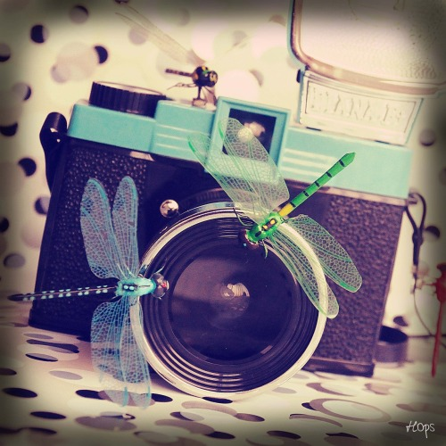 Vintage Camera (Diana F+) with some Dragonflies, Lomography. Concept, Photo: Hops (Sara Gentilini). Buy now on Etsy —> https://www.etsy.com/listing/104879209/photography-15x15cm-vintage-camera-diana My Etsy Shop —> www.etsy.com/shop/SaraHops © All Rights Reserved © Sara Gentilini (Hops) © Queste foto sono coperte da copyright