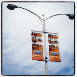 thejenhill:  Let the banners fly! Don't Eat The Whale Meat opens tomorrow! (Taken with Instagram at Vancouver Maritime Museum)